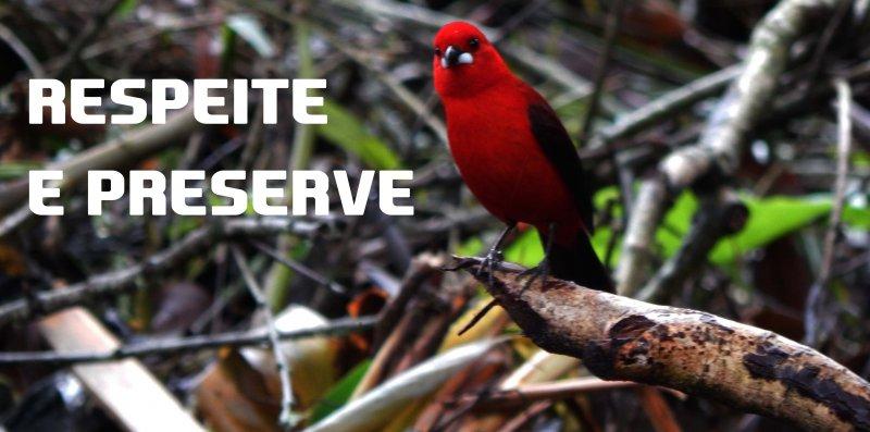 respeite a natureza preserve meio ambiente sustentabilidade proteja dia da arvore araucárias pássaros fauna flora bosques